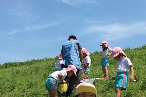揖斐川堤防で草滑り